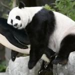 mise à jour pingouin panda